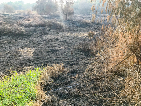 Burning dry grass and reeds in thailand