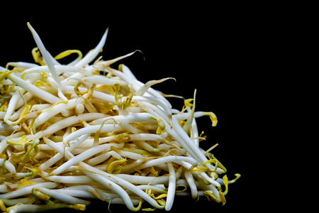 close up mung bean sprout on black background Stockfoto