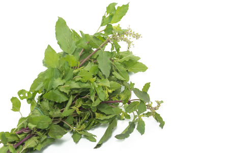 hot basil leaves isolated on white background