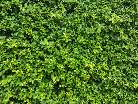 texture of nature tree wall background texture