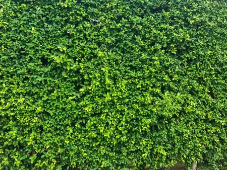 textuur van aard boom muur achtergrond textuur