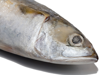 close up of tuna fish on white background Stock Photo
