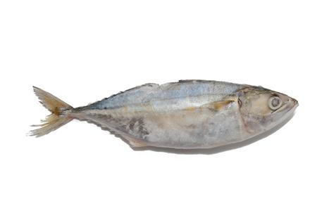 close up of tuna fish on white background Stock Photo