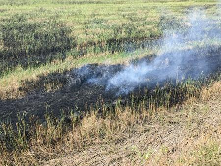 Farmland with smoke form fire burning rice straw