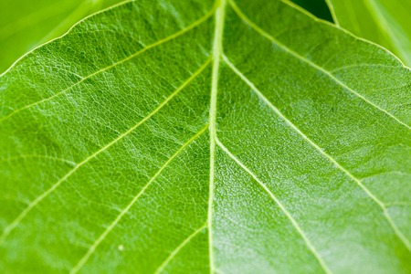 close up of fresh green leaves Texture background Standard-Bild