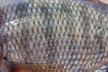 close up of Tilapia fish background texture