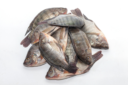 close up of Tilapia fish on white background