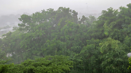 heavy wind on the tree in rainy day Stock Photo