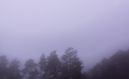 Pine tree forest with fog near mountain at Doi Mon Jong, Chiang Mai, Thailand