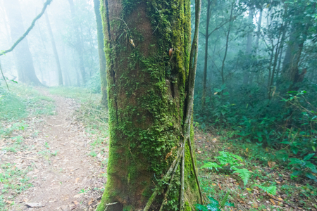 green moss on the tree at mon jong national park ,chaing mai,Thailand Stockfoto