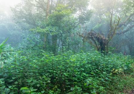 tropical rainforest at mon jong national park ,chaing mai,Thailand