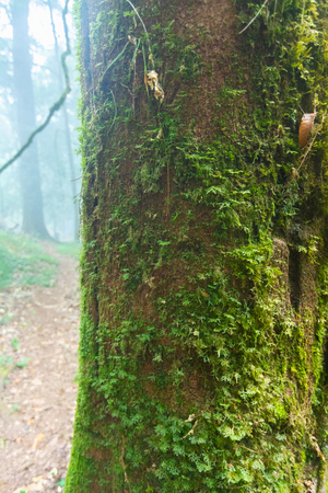 green moss on the tree at mon jong national park ,chaing mai,Thailand Stock Photo