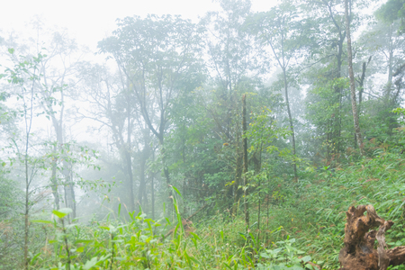 heavy fog, cloud and mist in tropical rainforest in mon jong doi at Chaing mai, Thailand Stock Photo