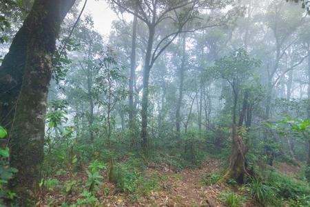dirt walkway in tropical rainforest plants at mon jong international park Chaingmai, Thailand