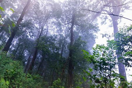 tropical rainforest plants at mon jong international park Chaingmai, Thailand