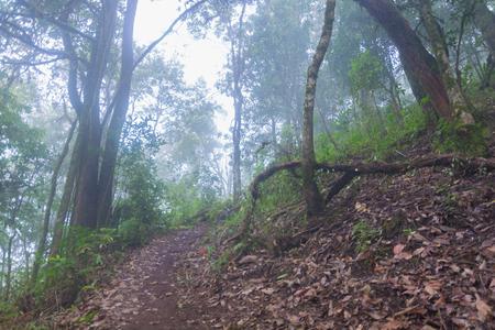 tropical rainforest in mon jong doi at Chaing mai, Thailand