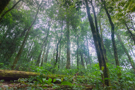 fallen tree in tropical rainforest plants at mon jong international park Chaingmai, Thailand Stockfoto