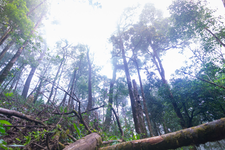 fallen tree in tropical rainforest plants at mon jong international park Chaingmai, Thailand Archivio Fotografico