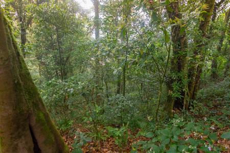 walking path in fresh green rainforest at mon jong doi, Thailand