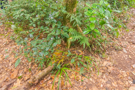 fresh green rainforest at mon jong doi, Chaing mai, Thailand