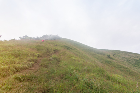 fog and green grass hill top of the mountain at mon jong doi, Thailand