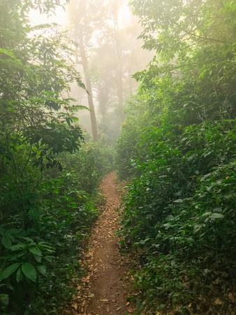 hiking path in green rain forest at mon jong doi, Chaing mai, Thailand Stockfoto