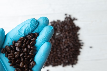 close up of hand in blue glove holding roast coffee beans