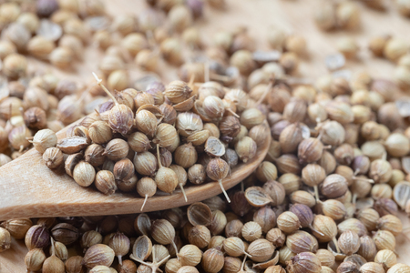close up of pile Coriander seeds and wooden spoon