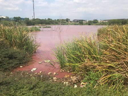 pollution of big pink pond near chemical industrial plant at Thailand