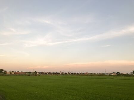 fresh green rice field before raining at Thailand