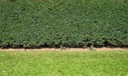 Decorative garden photo