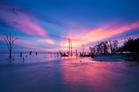 Beautiful tropical sunset behind silhouetted mangrove trees photo