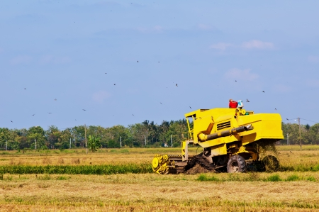 Yellow combined harvester on paddy field harvesting in sunny weather photo