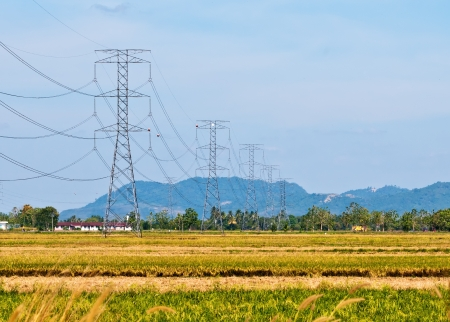 High voltage towers on vast paddy field photo