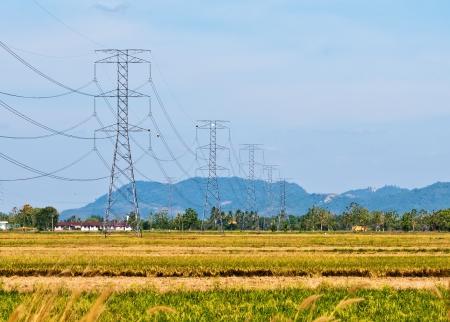 Torres de alta tensión de gran campo de arroz