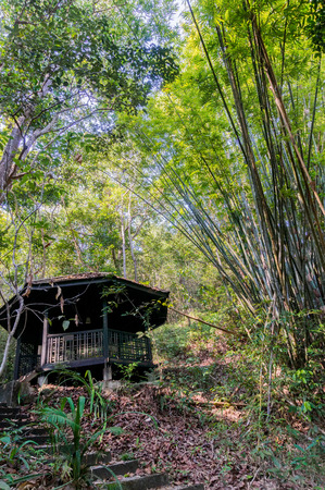 Small hut in the jungle surrounder with bamboo trees photo