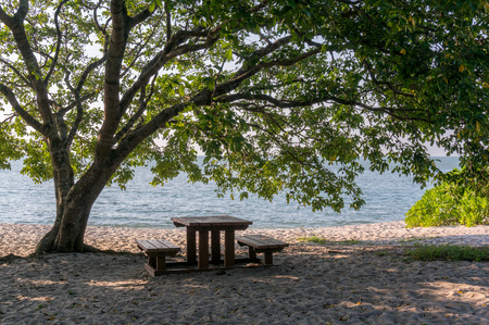 Table and benches under the tree at beach photo