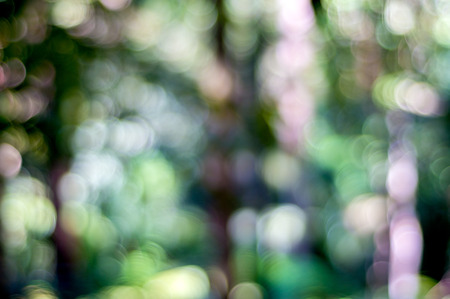 defocus: Nature background with abstract de-focus bokeh effect