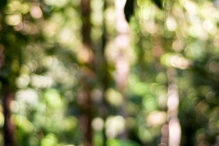 defocus: Nature background with abstract de-focus bokeh effect