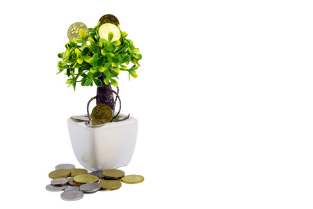 Saving concept, coins grow on tree isolated on white background Stock Photo