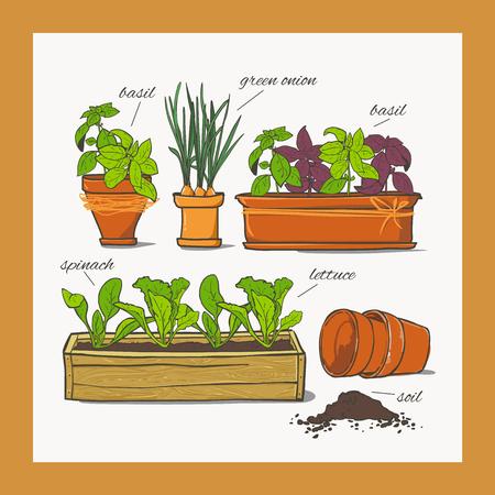 Spinazie sla groene uien basilicum specerijen kruiden kruiden in een keramische pot.
