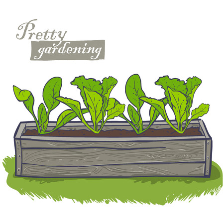 seedlings: flowerpots for plants, horizontal wooden container with spinach, lettuce, seedlings Illustration