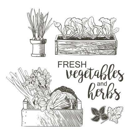 celery: Celery cabbage greens onions garlic basil parsley in the flowerpots Illustration