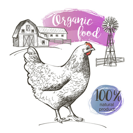 chicken dish: Chicken and farm. Vector illustration in vintage style