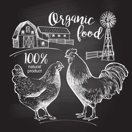Basándose en la pizarra. Gallo granero de la granja de gallina. Diseño para la industria del cultivo, embalaje original y otros tipos de negocios, productos bio. ilustración vectorial de estilo vintage