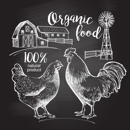 Drawing on the blackboard. Rooster hen farm barn.  Design for farming industry, original packaging and other types of bio product business. Vector illustration in vintage style