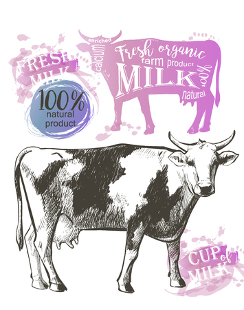 red heifer: Cow in graphic vintage style, hand drawing image.