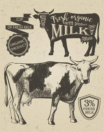 bezel: Cow in graphic vintage style, hand drawing image.