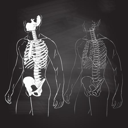 Human Body Parts Skeletal Man Anatomy Illustration Chalk Drawing ...