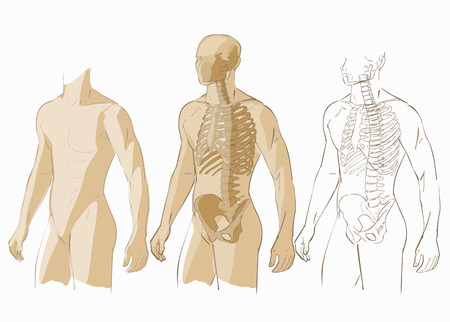 body parts: Human body parts skeletal man anatomy illustration isolated Illustration